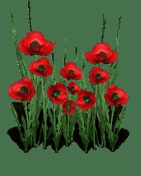 poppy_flower_bunch_18642